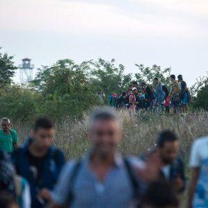 Siirtolaisia tulossa rajan yli Unkariin 26. elokuuta.