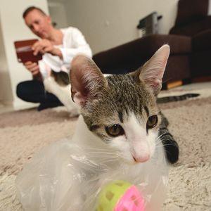 Neo-kissa ja Ari Kesonen