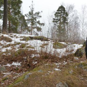 Raaseporin kaupunginvaltuutettu Björn Siggberg omistamallaan tontilla Karjaan keskustassa.