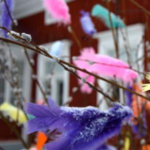 Pajunkissoja koristeltu höyhenillä