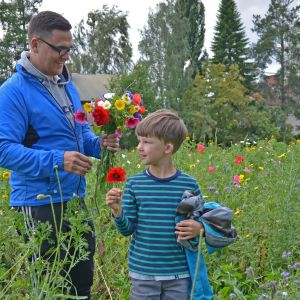 Timo ja Emil Viitala keräävät kukkia