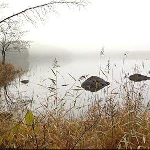 Sumuinen maisema Repoveden kansallispuistossa