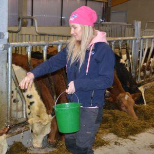 Eija Koutonen ruokkii lehmiä.