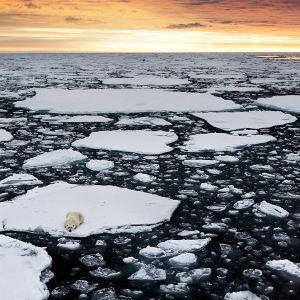 Jääkarhu jäätiköllä Huippuvuorilla Norjassa.