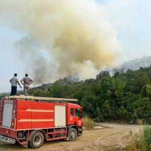 paloauto ja metsäpalo