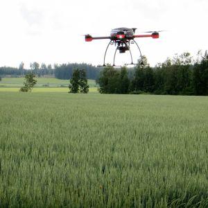 Dronekopteri kuvaa peltoa lintuperspektiivistä.