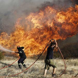 Palomiehet sammuttavat maastopaloa Anavyssosissa.