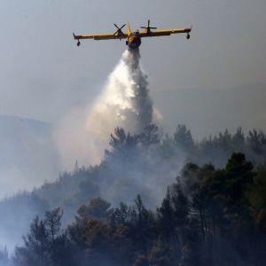 Lentokone levittää vettä palavan metsän yllä Kreikassa.