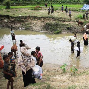 Ihmisiä ja lehmiä kahlaamassa joessa.