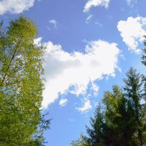 EU-parlamentin päätös uhkaa metsien monimuotoisuutta, näkee Suomen luonnonsuojeluliitto.