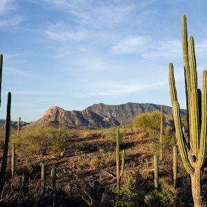 Maisemaa pohjois-Meksikossa.
