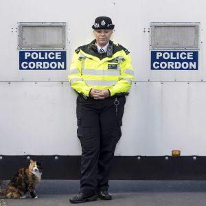 Poliisi seisoo seinän vieressä, kissa istuu maassa.