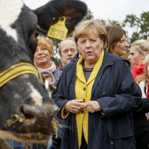 Angela Merkel ja lehmä