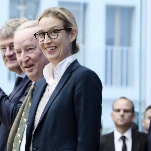 AfD-puolueen johtoa vasemmalta: Jörg Meuthen, Alexander Gauland , Alice Weidel ja Frauke Petry lehdistötilaisuudessa tänään Berliinissä.