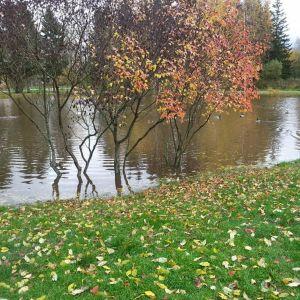 Vantaanjoen tulvaa Riihimäen Peltosaaressa