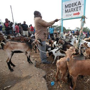 Malawi markkinat.
