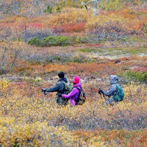 Retkeilijöitä ruskan värittämässä maisemassa.