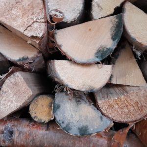 Homeisia polttopuita pinossa