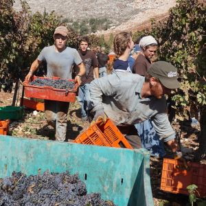 Psagot viinien valmistamo viinivalmistamo Israel Länsiranta