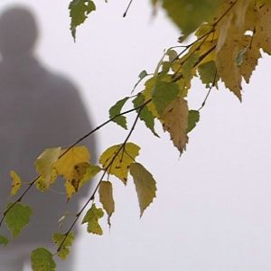 Epäselvä mieshahmo seisoo sumuisessa säässä etualalla kellastuneet koivunlehdet