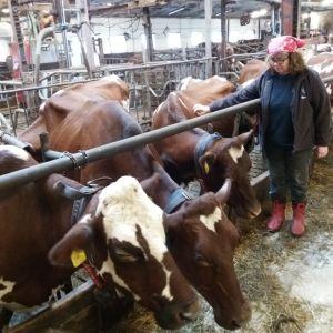 Seija Kairinen maitotilallaan Maskussa