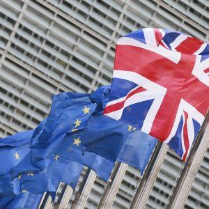 Lipputangoissa liehuu useita EU-lippuja ja yksi Britannian lippu.