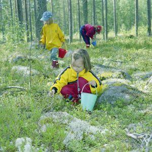 Kolme lasta poimii metsässä mustikoita.
