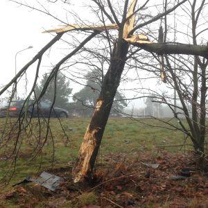 puu katkennut kolarin voimasta