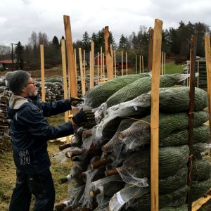 Työntekijä pinoaa pakattuja joulukuusia kuljetuslavalle Raaseporissa.