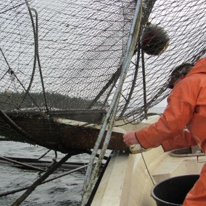 fiskare med ryssja
