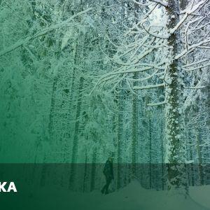 Abimix grafik för studentexamensproven i finska
