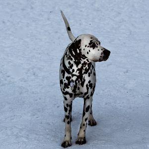 Hund i snö