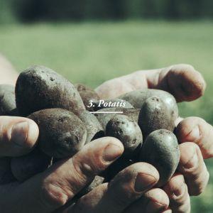 Två nävar nyplockad potatis