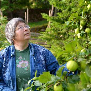 Gun-Britt Husberg betraktar äppelträd
