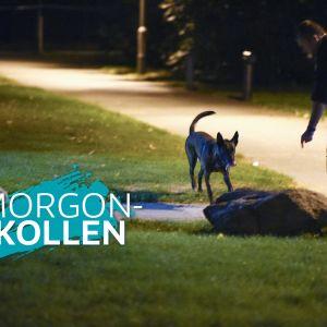 Polisen undersöker området där fyra personer skottskadades i Malmö den 25 september 2016.