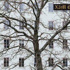 En höghusfasad med ett stort träd framför sig.