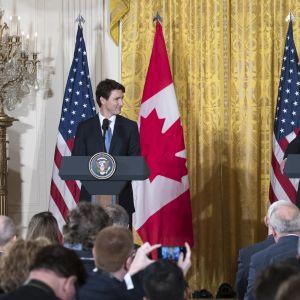 Justin Trudeau och Donald Trump under en presskonferens i Vita huset 13.2.2017.