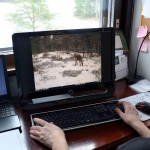 Kvinna ser på djurbilder på sin dator.