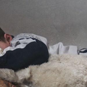 Ett syriskt barn ligger i en säng med ett mjukisdjur