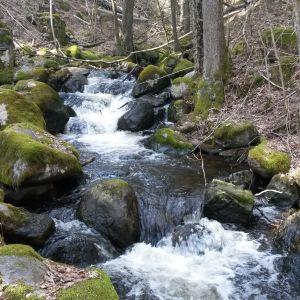 Ett litet vattenfall.