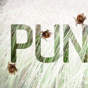 Punkit