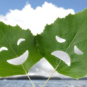 Kesäteattereiden menestys -artikkelikuva, koivunlehti, ilo ja suru -naamat
