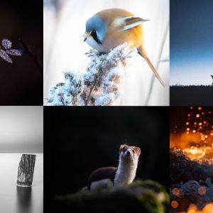 Luontovuoden talvihaasteen ensimmäinen haasteviikko