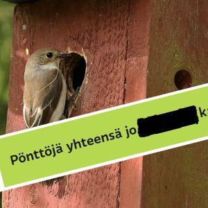 miljoona linnunpönttöä