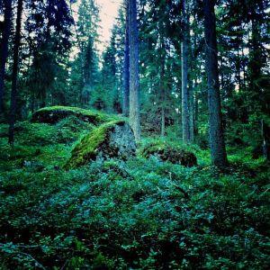 metsä, synkkä