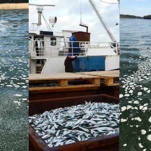 fiskfett i vattnet