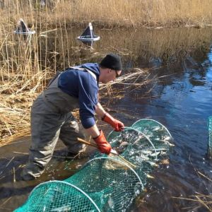Fiskare kollar sitt nät i en glosjö.