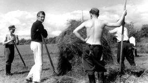Soldater hjälper till med höbärgning, 1942