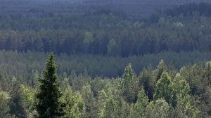 Metsämaisemaa