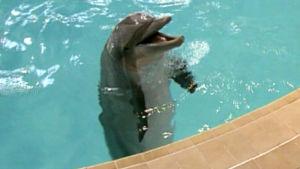 Delfin, 2010